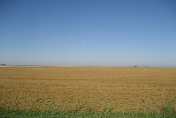 saskatchewan-wheat-field-600x450